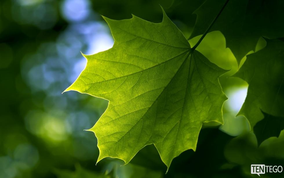 Artykuł o liściach